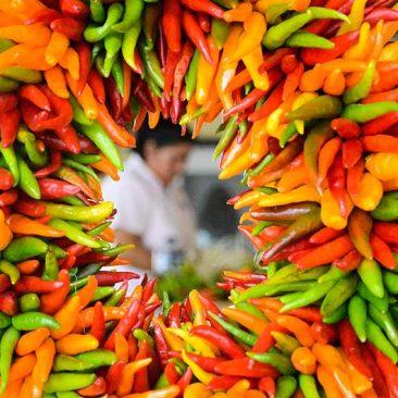 green-hatch-chile