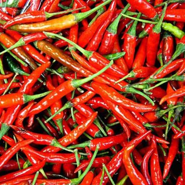 red-hatch-chile-peppers