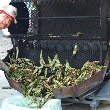 roasted-hatch-chile